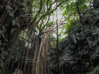 森林の写真・画像素材[561543]