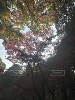 自然の写真・画像素材[261502]