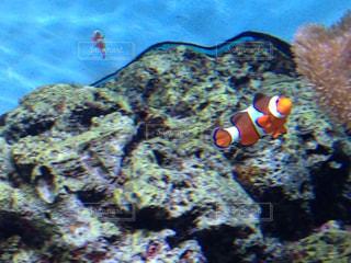 観賞魚の写真・画像素材[246760]
