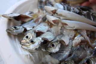 魚 - No.246550