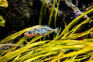 魚の写真・画像素材[246665]