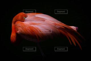 動物の写真・画像素材[246704]