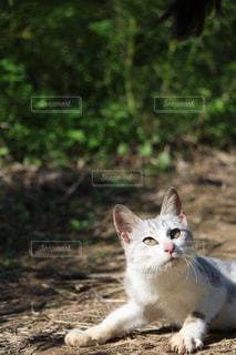 猫 - No.246801