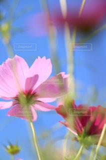 自然の写真・画像素材[246803]