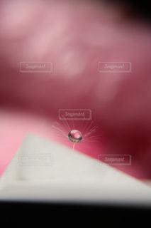 水滴の写真・画像素材[257639]