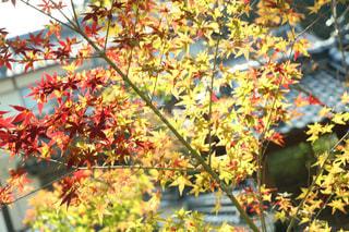 秋の写真・画像素材[257642]
