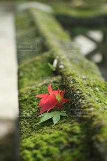 秋の写真・画像素材[257646]