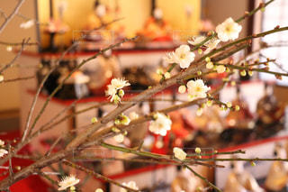 梅の写真・画像素材[344835]