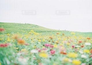 近くに緑のフィールドのの写真・画像素材[74]