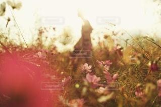花のぼやけた画像の写真・画像素材[77]