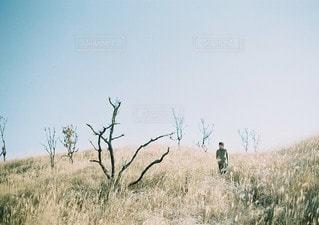 乾燥草原を横切ってシマウマの群れの写真・画像素材[96]