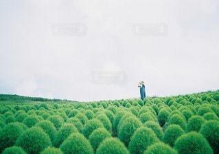 庭園の緑の植物の写真・画像素材[1043]