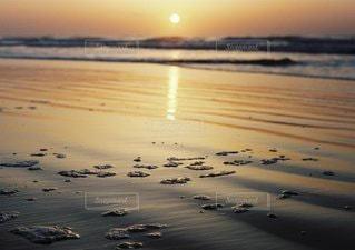 水の体の近くのビーチに立っているカモメの群れの写真・画像素材[1051]