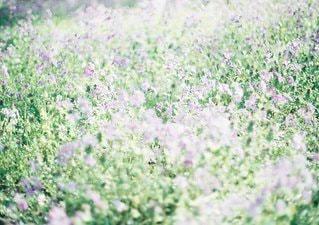 近くに緑のフィールドのの写真・画像素材[1086]