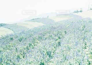 背景の山と木の写真・画像素材[1121]