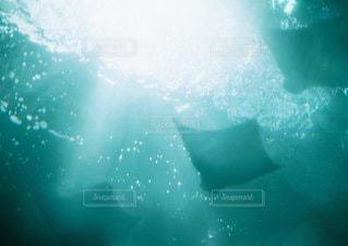 水面下を泳ぐ魚たちの写真・画像素材[1131]
