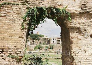 岩の壁の横にあるツリーの写真・画像素材[1174]