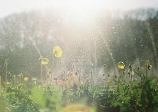 近くの花のアップの写真・画像素材[1177]
