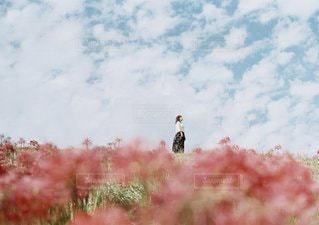 フィールドに立っている鳥の写真・画像素材[1205]
