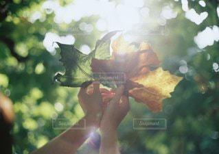 森の中の女性のぼやけた画像の写真・画像素材[1220]