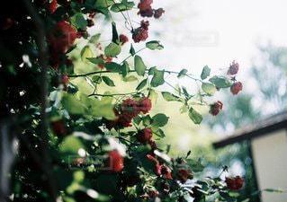近くの花のアップの写真・画像素材[1221]
