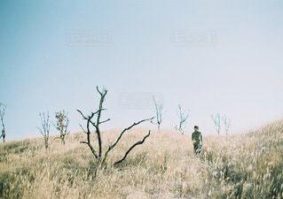 乾燥草原を横切ってシマウマの群れの写真・画像素材[1268]