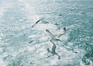 水のサーフボードで波に乗って男の写真・画像素材[1322]