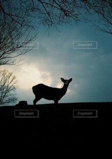 羊は日没の前に立っています。の写真・画像素材[1348]