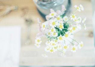 近くの花のアップの写真・画像素材[1349]