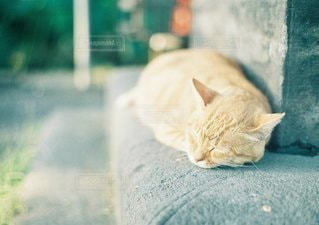 地面に横になっている猫 - No.1353