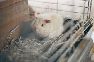 動物の写真・画像素材[1478]