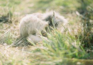 猫の写真・画像素材[1431]