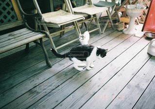 猫の写真・画像素材[1405]