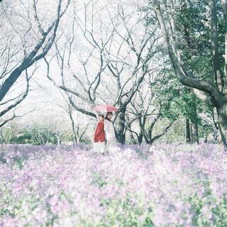森の大きな木の写真・画像素材[42]
