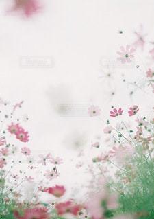 花のぼやけた画像の写真・画像素材[75]