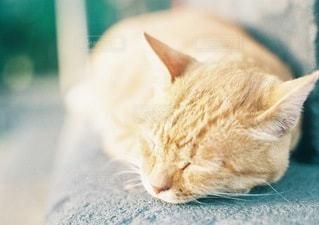 猫の写真・画像素材[129]