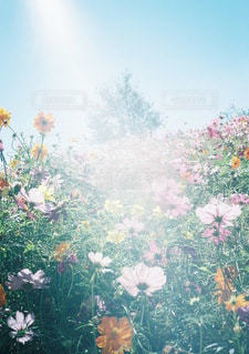 テーブルの上の花の花瓶の写真・画像素材[134]