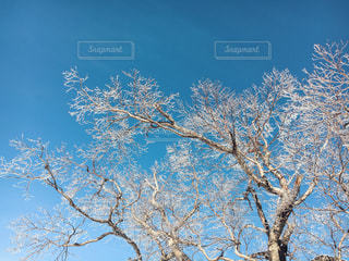 自然の写真・画像素材[296406]