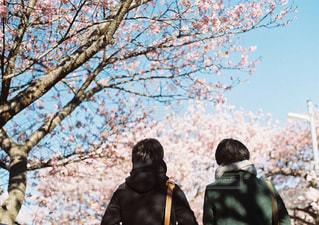春 - No.369527