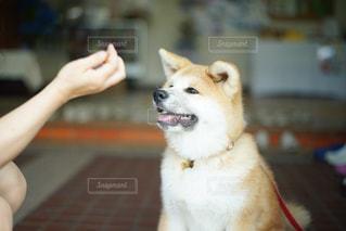 近くに犬のアップの写真・画像素材[719041]