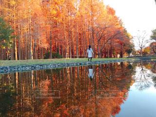木々 に囲まれた水の体の写真・画像素材[915339]