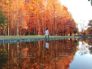 木々 に囲まれた水の体の写真・画像素材[915340]