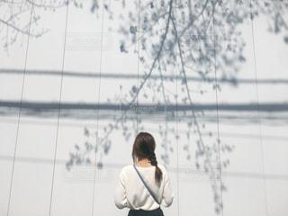 桜の影の写真・画像素材[1119461]