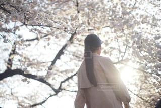 春とトレンチコートの写真・画像素材[1119463]