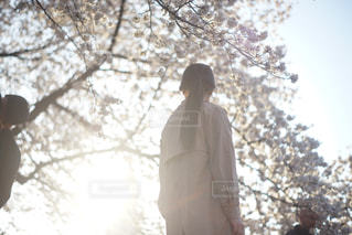 桜と女性の写真・画像素材[1119464]