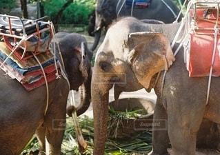 象の背中に乗っている人々のグループの写真・画像素材[2686244]