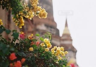 花をクローズアップするの写真・画像素材[2686243]
