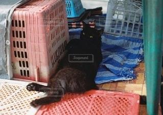 ベッドの上に座っている猫の写真・画像素材[2686247]