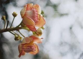 花をクローズアップするの写真・画像素材[2686249]