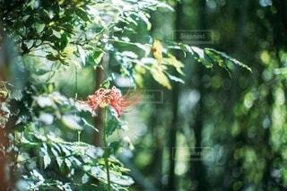 木のクローズアップの写真・画像素材[3879609]